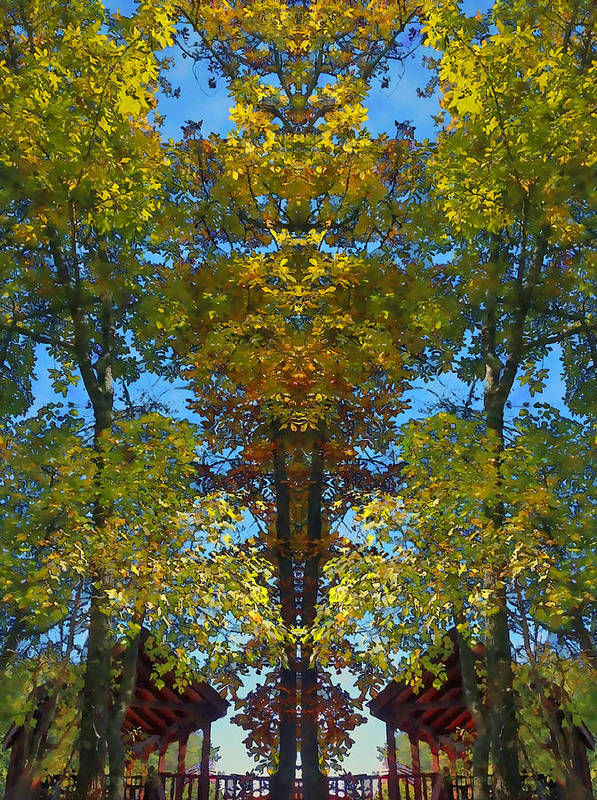 Trees Print featuring the photograph Trees Alive by Susan Leggett
