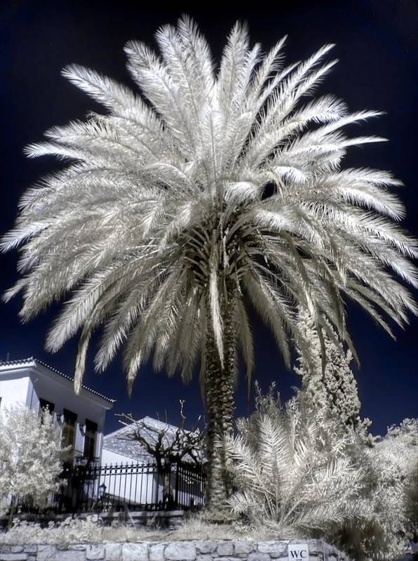 Athens Art Print featuring the photograph Under The Palm Tree by Michael Tzacostas
