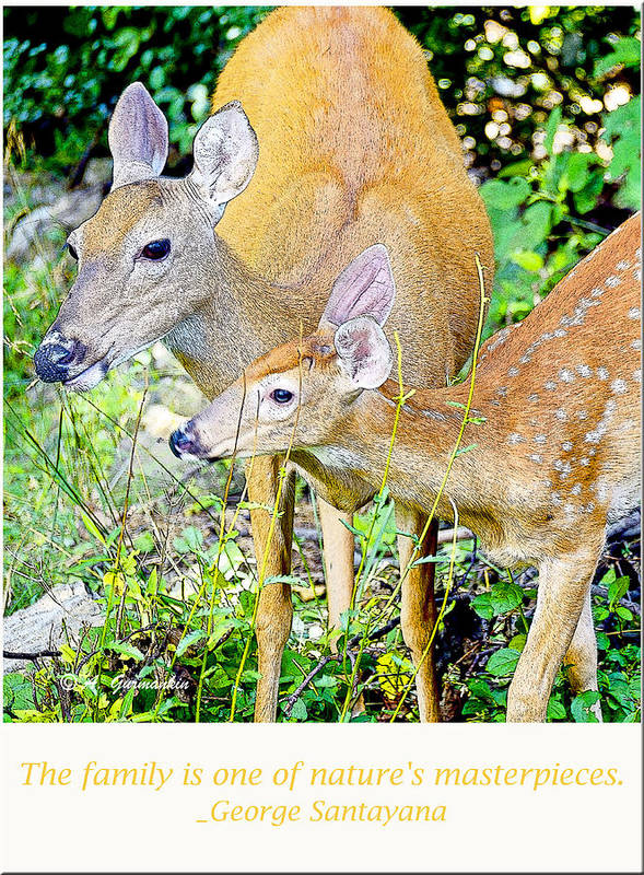 Vertical Art Print featuring the photograph Whitetailed Deer Doe And Fawn by A Gurmankin