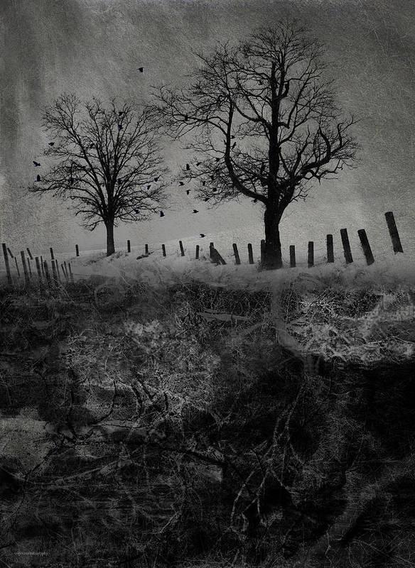 Trees Art Print featuring the digital art Dark Roost by Ron Jones