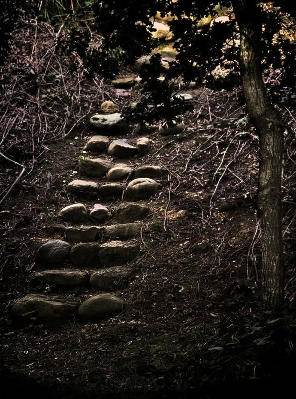 Steps Art Print featuring the photograph A Few More Steps by Odd Jeppesen