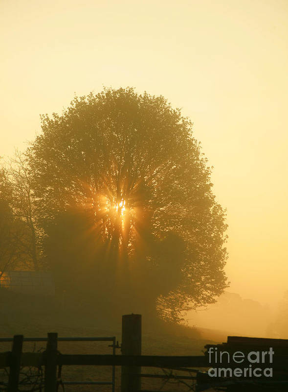 Dawn Art Print featuring the photograph Early Morning Sunshine by Susan Wall