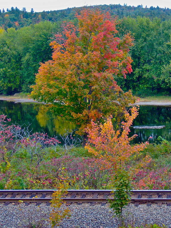 Landscape Art Print featuring the photograph Fall By The River 7 by George Ramos