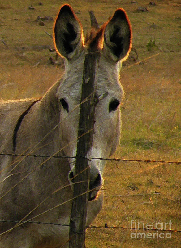 Donkey Art Print featuring the photograph Hill Country Camouflage by Joe Jake Pratt