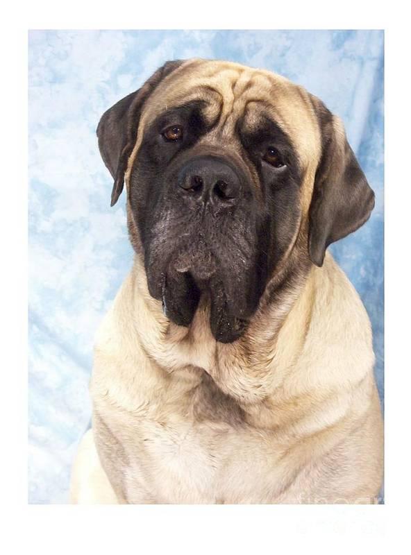 Mastiff Digital Art Art Print featuring the digital art Mastiff 369 by Larry Matthews