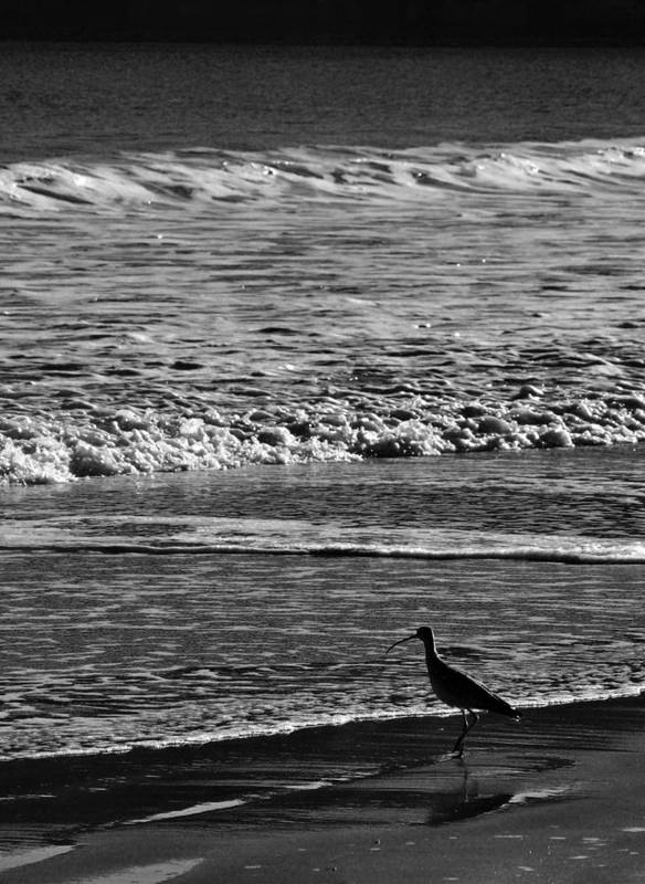 Sandpiper Art Print featuring the photograph Sandpiper In The Surf by Philip Osterkamp