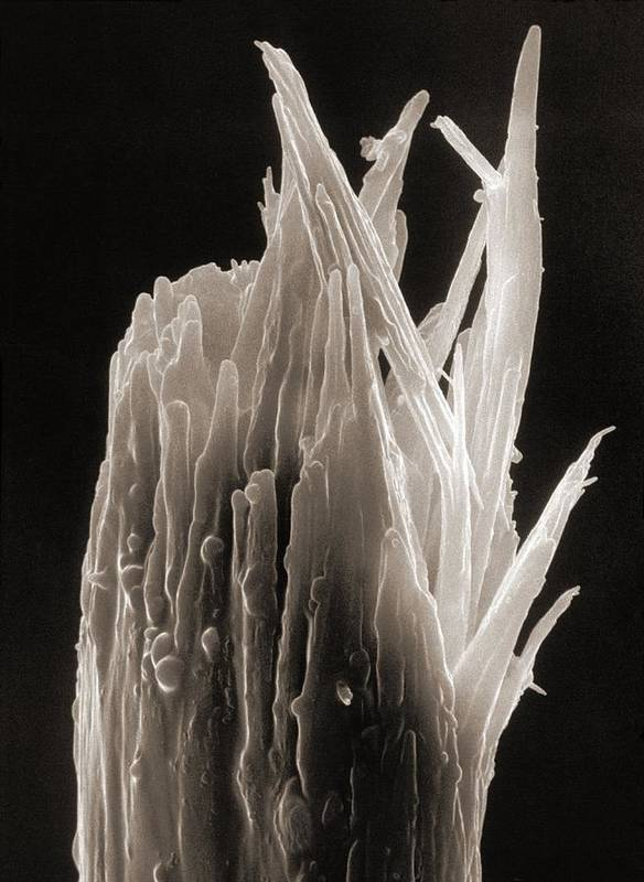 Human Body Art Print featuring the photograph Sem Of A Damaged Human Head Hair With A Split End by .