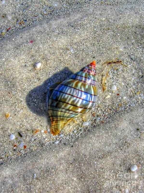 Shell Art Print featuring the photograph The Rainbow Shell by Michael Garyet