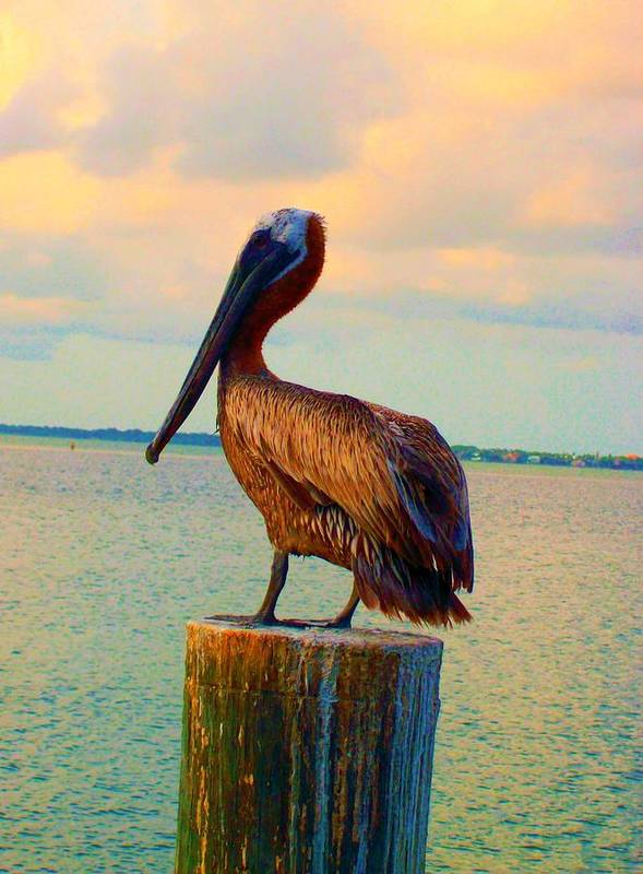 Pelican Art Print featuring the photograph Until Tomorrow In Long Boat Key 2 by Megan Ford-Miller