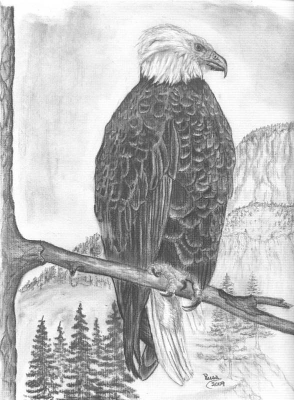 American Bald Eagle Art Print featuring the drawing American Bald Eagle by Russ Smith