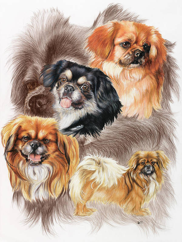 Toy Group Art Print featuring the mixed media Tibetan Spaniel W/ghost by Barbara Keith