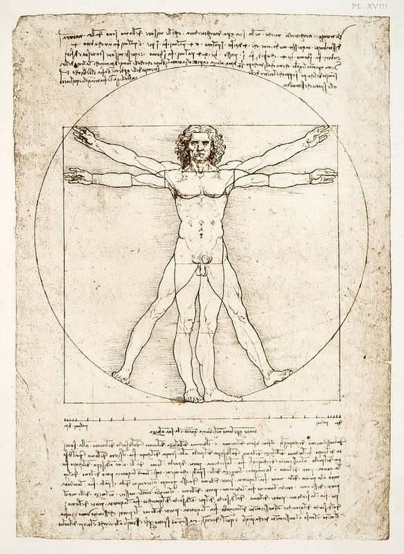 Leonardo Da Vinci Art Print featuring the painting The Proportions Of The Human Figure by Leonardo Da Vinci