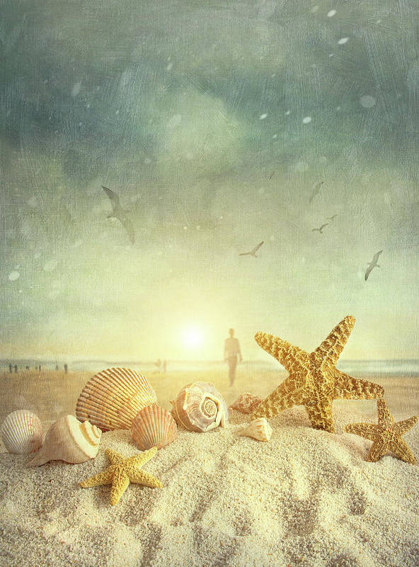 Aquatic Print featuring the photograph Starfish And Seashells At The Beach by Sandra Cunningham