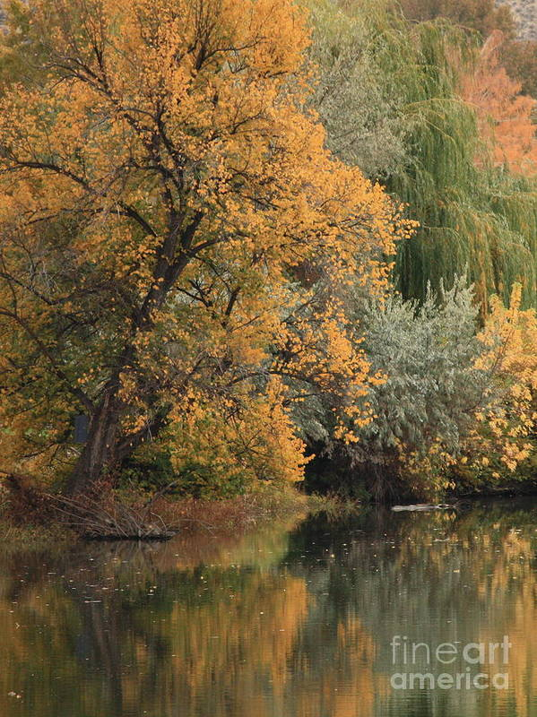 Landscape Art Print featuring the photograph Autumn Riverbank by Carol Groenen