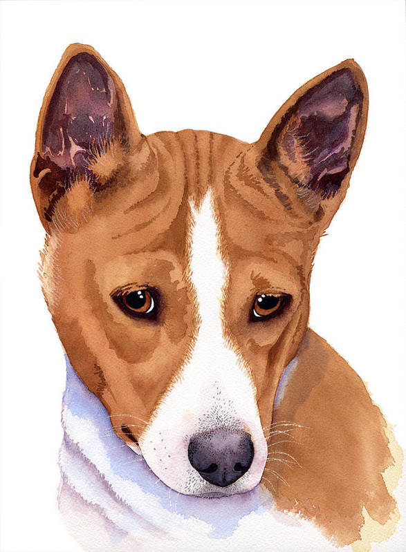 Dogs Art Print featuring the painting Basenji Sweetness Watercolor by Michele Angel