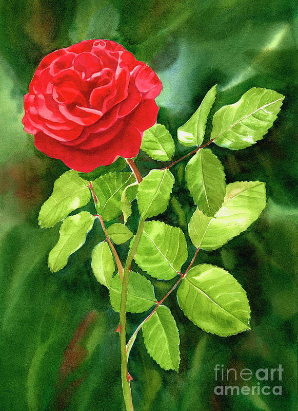 Red Roses Art Print featuring the painting Bright Red Rose With Dark Background by Sharon Freeman