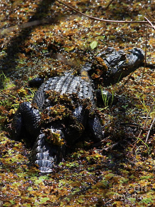 Alligator Print featuring the photograph Camouflage by Carol Groenen