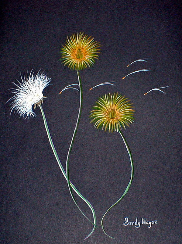 Dandelion Art Print featuring the painting Dandelions1 by Sandy Wager