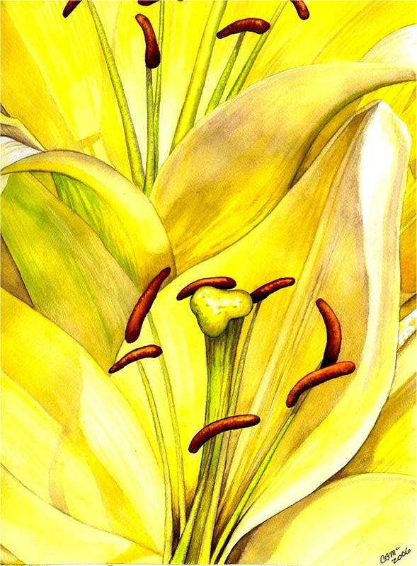 Lily Art Print featuring the painting Daylily by Catherine G McElroy