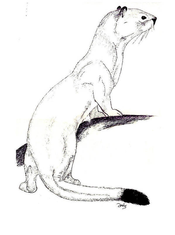 Weasel Art Print featuring the painting Ermine by Debra Sandstrom