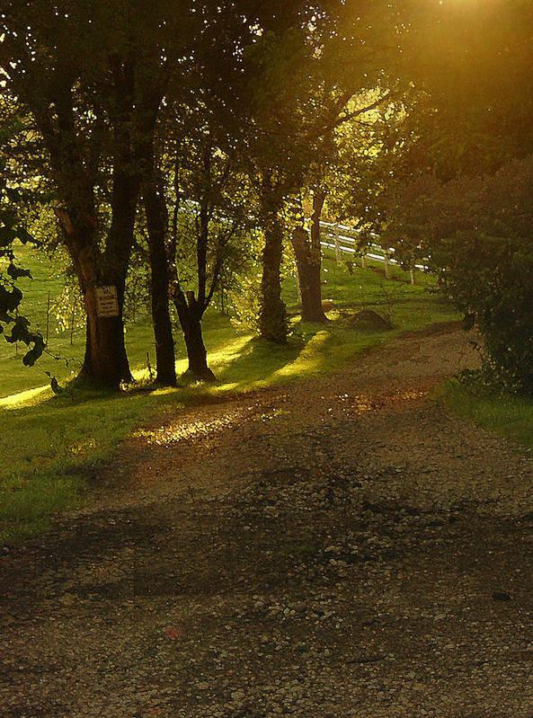 Landscape Art Print featuring the photograph Evening Path by Steve Karol