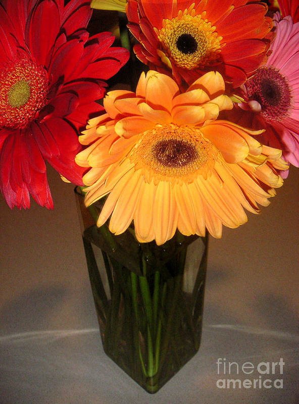 Nature Art Print featuring the photograph Gerbera Daisies - Vased by Lucyna A M Green