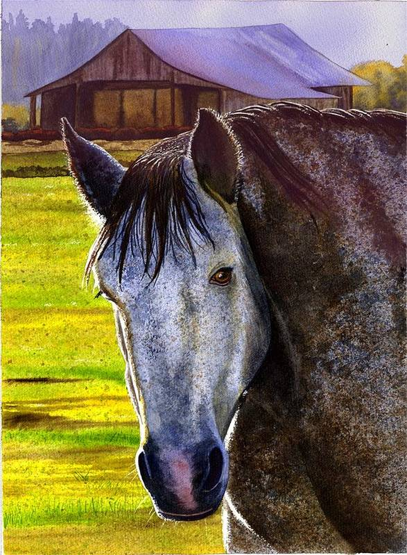 Horse Art Print featuring the painting Gray Horse by Catherine G McElroy