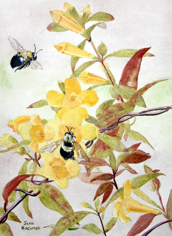 Jasmine Art Print featuring the painting Jessamine Bee Mine by Jean Blackmer