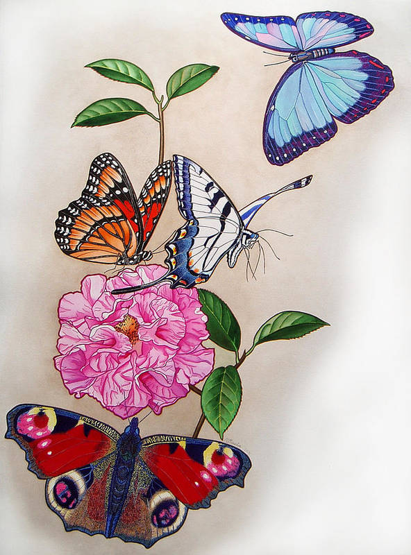 Butterflies Art Print featuring the painting Ladies Of The Camellia by Vlasta Smola