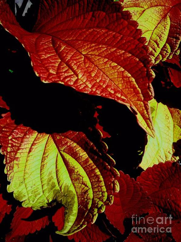 Botanical Art Print featuring the photograph Leafy Melange by Dorota Zukowska