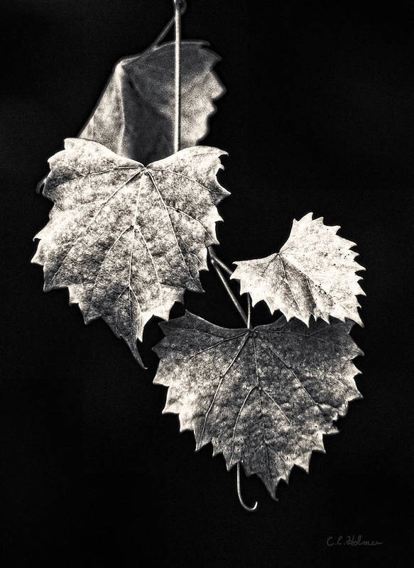 B&w Art Print featuring the photograph Leaves by Christopher Holmes