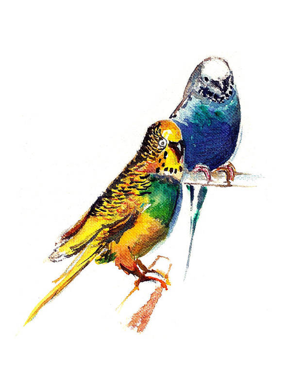 Nature Art Print featuring the painting Love Birds by Anil Nene