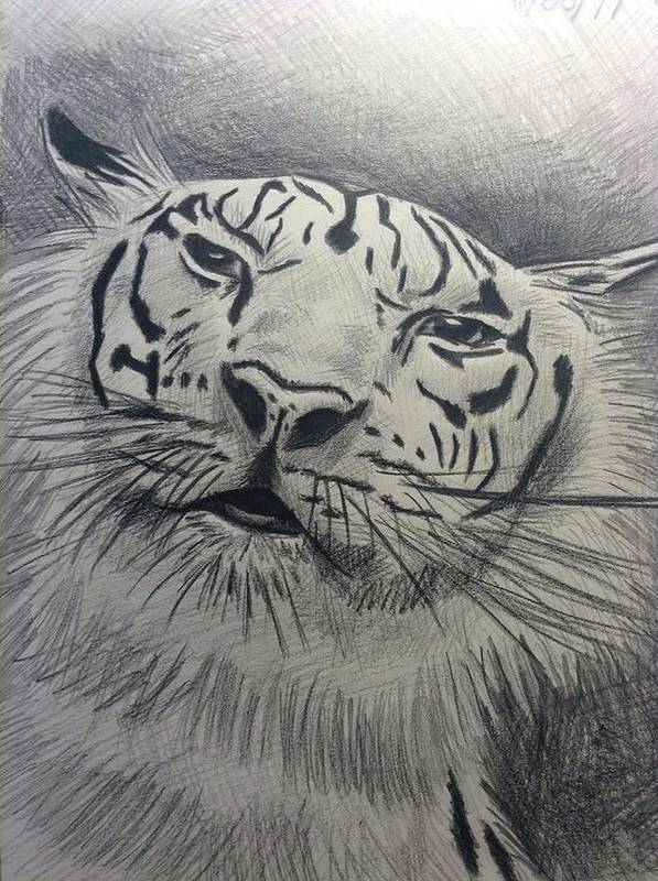 Tiger Animals Pencil Drawing Art Print featuring the drawing Mr Tiger by John DiMare