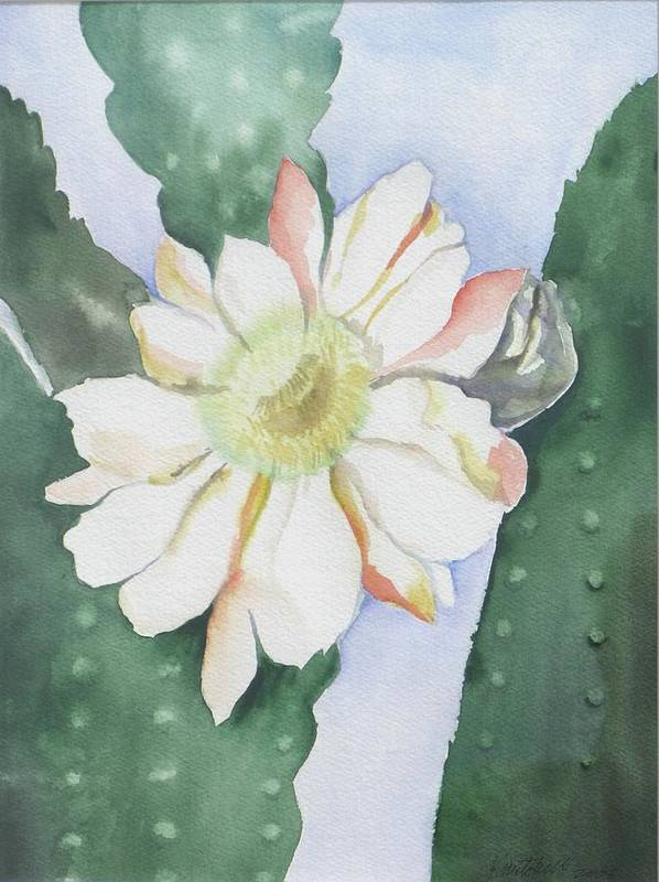 Cactus Flower Art Print featuring the painting Night Bloomers by Kathy Mitchell