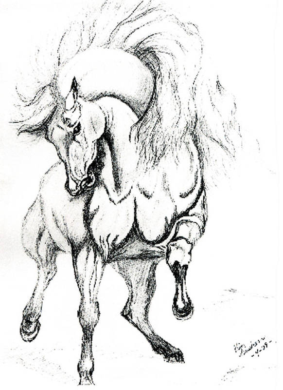 Horses Art Print featuring the drawing Noble Stallion by Kim Souza