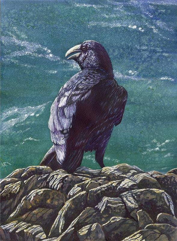 Bird Art Print featuring the painting Raven by Catherine G McElroy