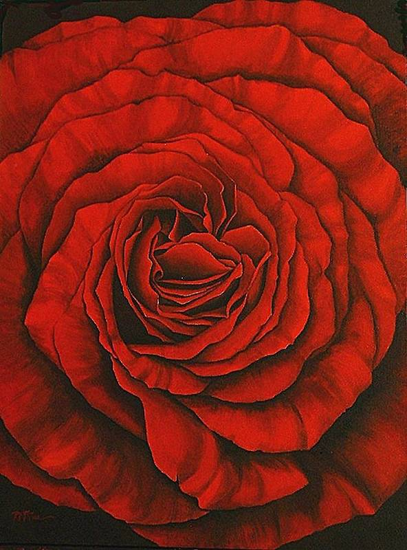 Red Art Print featuring the painting Red Rose II by Rowena Finn
