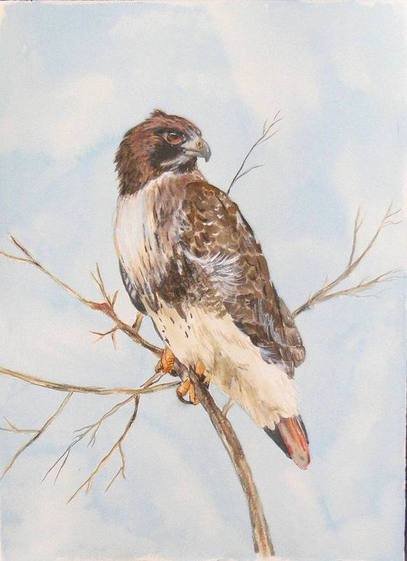 Art Print featuring the painting Red Tail Hawk by Diane Ziemski
