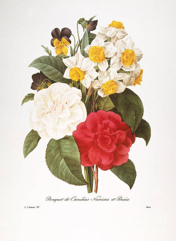 1833 Art Print featuring the photograph Redoute: Bouquet, 1833 by Granger