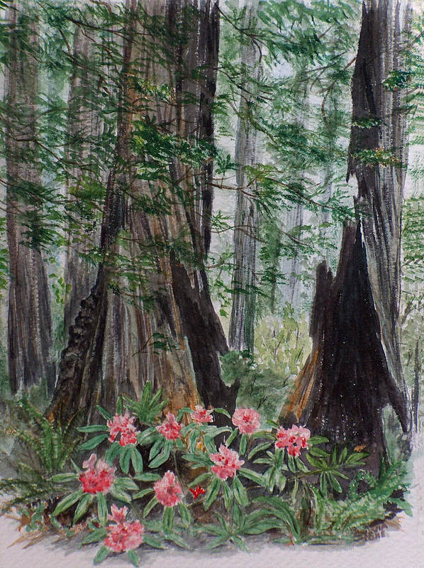 Redwood Art Print featuring the painting Redwoods by Sylvia Stone