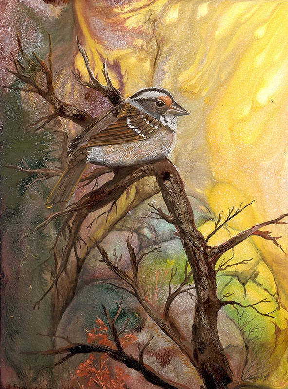 Bird Art Print featuring the painting Sparrow by Sherry Shipley