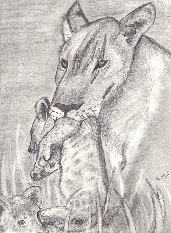 Lion Art Print featuring the drawing The Mother Lioness by Amber Opphile