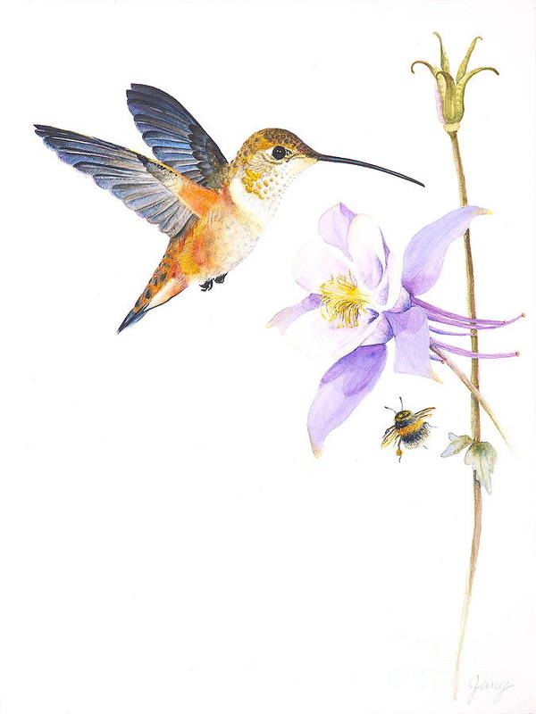 Hummingbird Art Print featuring the painting The Nectar Hunt by Jany Schindler