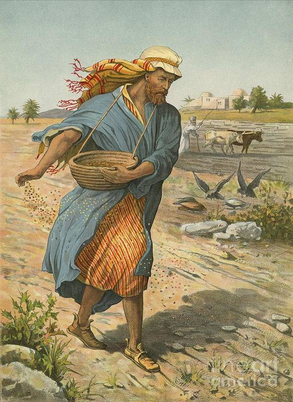 Bible; Children's; Jesus Christ; Seed; Sower; Parable Art Print featuring the painting The Sower Sowing The Seed by English School