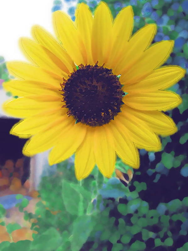 Sun Flower Art Print featuring the photograph The Sunflower by Chuck Shafer