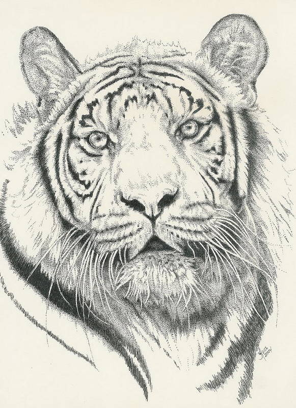 Tiger Art Print featuring the drawing Tigerlily by Barbara Keith