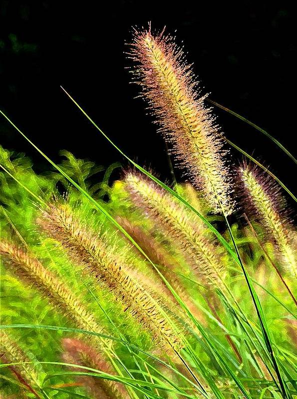 Nature Art Print featuring the photograph Wild Grass by Jim Darnall