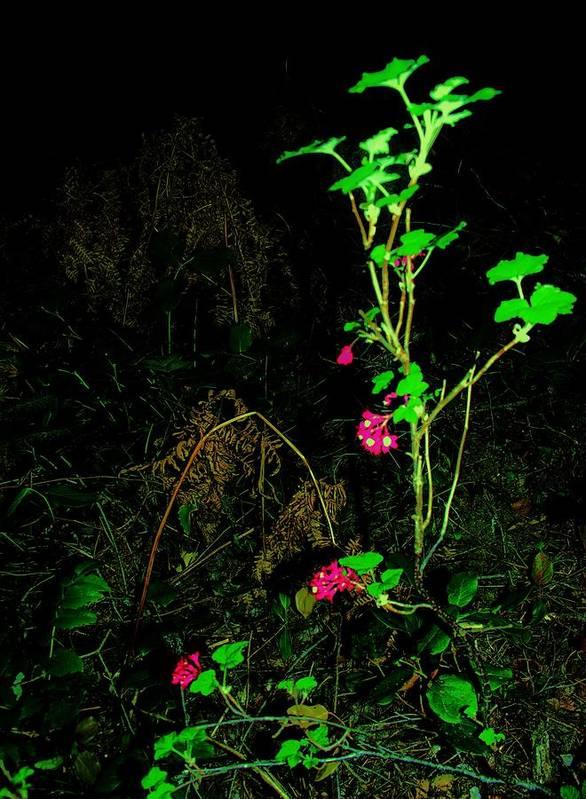 Flower Art Print featuring the photograph Woodland Bush by Mel Crist