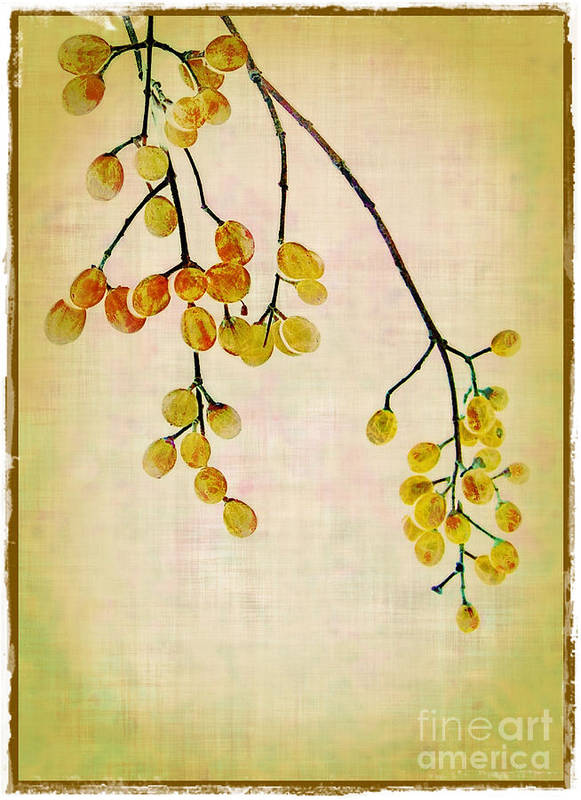 Yellow Art Print featuring the photograph Yellow Berries by Judi Bagwell