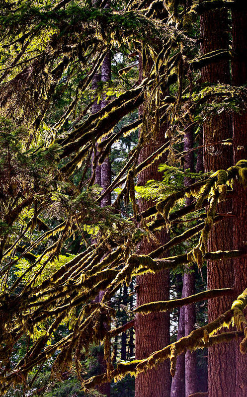 Art Print featuring the photograph Forest Trees by Liz Santie